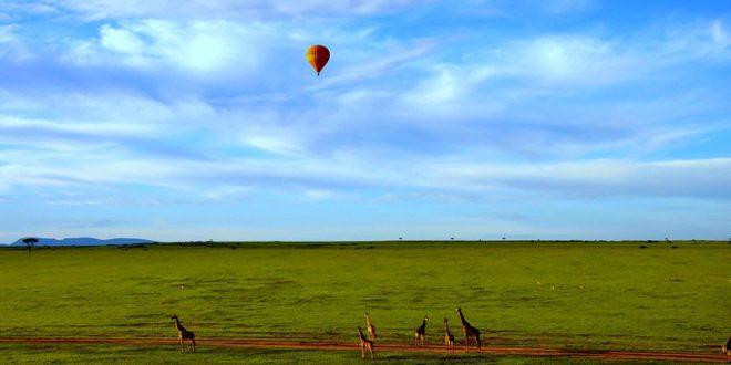 Où se rendre pour un safari mémorable au Kenya ?